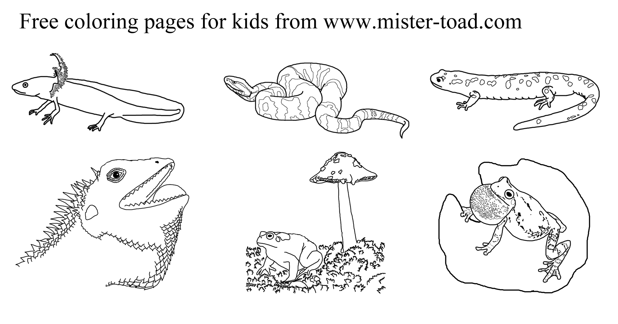 pictures of reptiles to color amphibian and reptile coloring pages of to pictures reptiles color