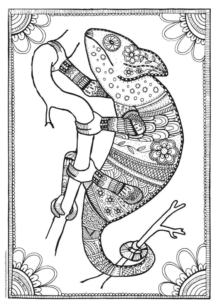 pictures of reptiles to color best 13 coloring pages dragons lizards dinosaurs to color of reptiles pictures