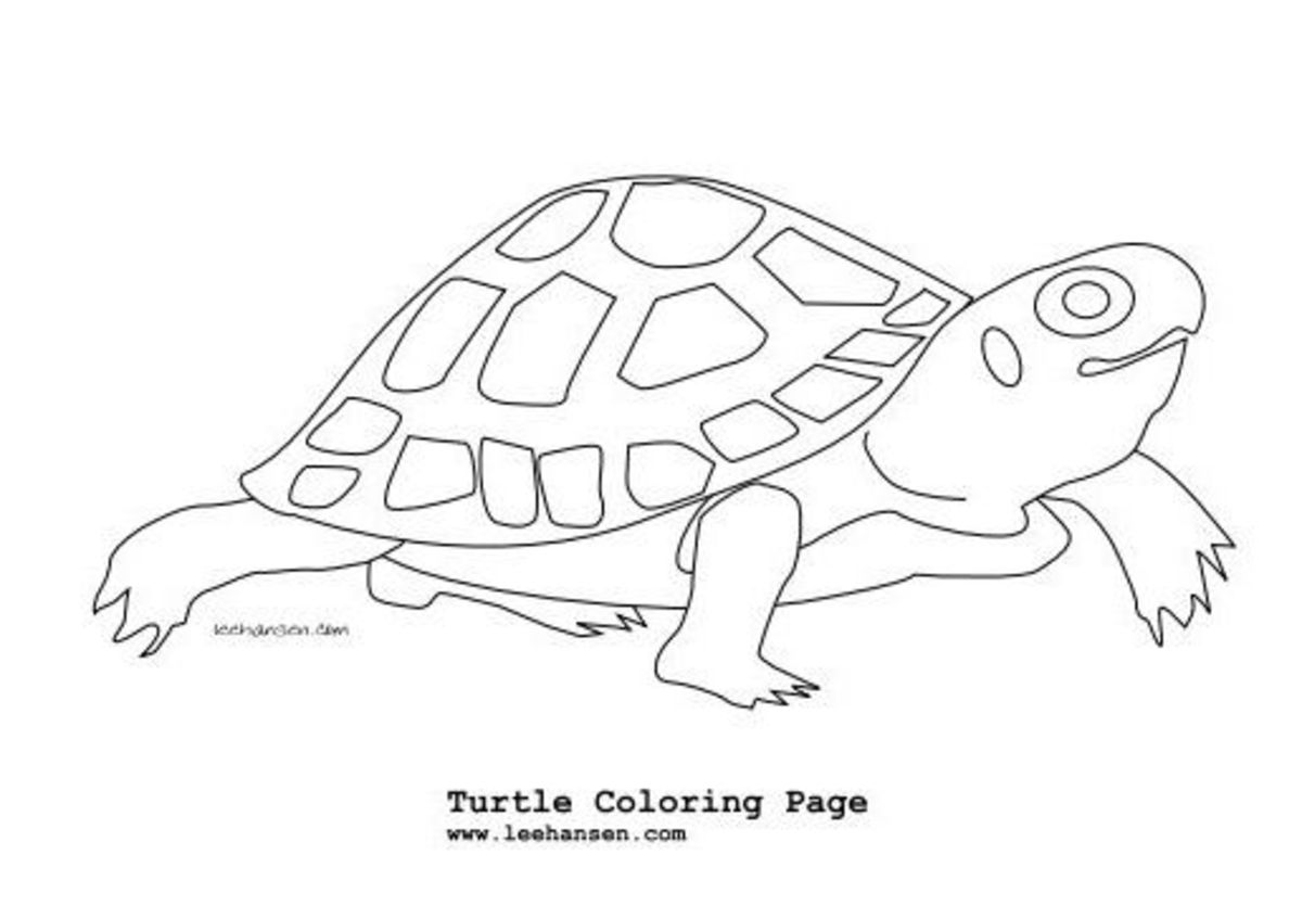 pictures of reptiles to color free lizard coloring pages pictures reptiles color of to