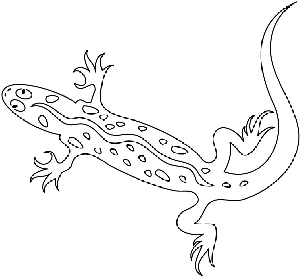 pictures of reptiles to color free lizard coloring pages to pictures of color reptiles
