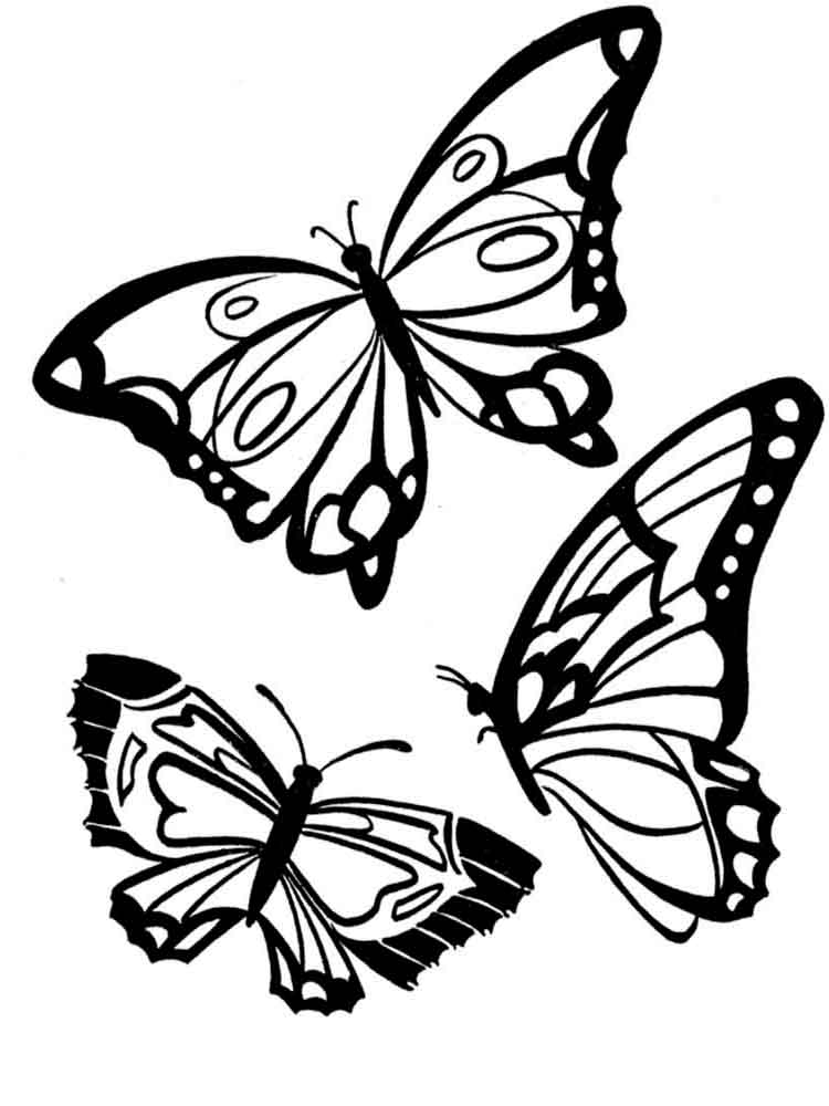 pictures to color of butterflies free printable butterfly coloring pages for kids pictures butterflies of color to