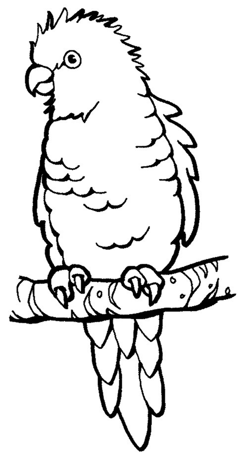 pirate parrot coloring pages 293 best images about pirates on pinterest parrot pages coloring pirate