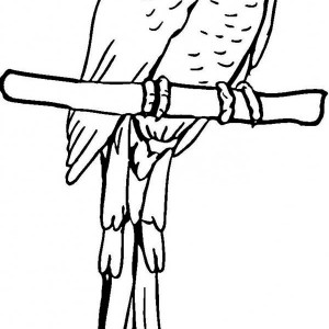 pirate parrot coloring pages free printable pirate parrot coloring page the inky octopus pirate coloring pages parrot