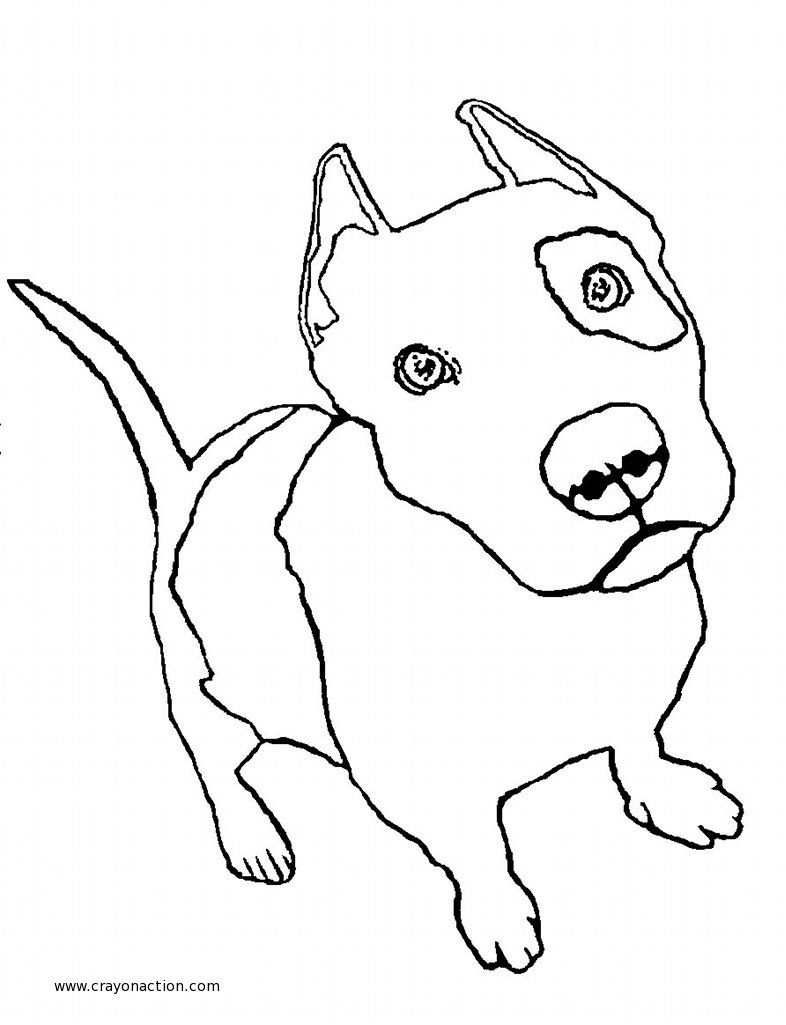 pitbull outline pictures coloring pitbull imagui outline pictures pitbull