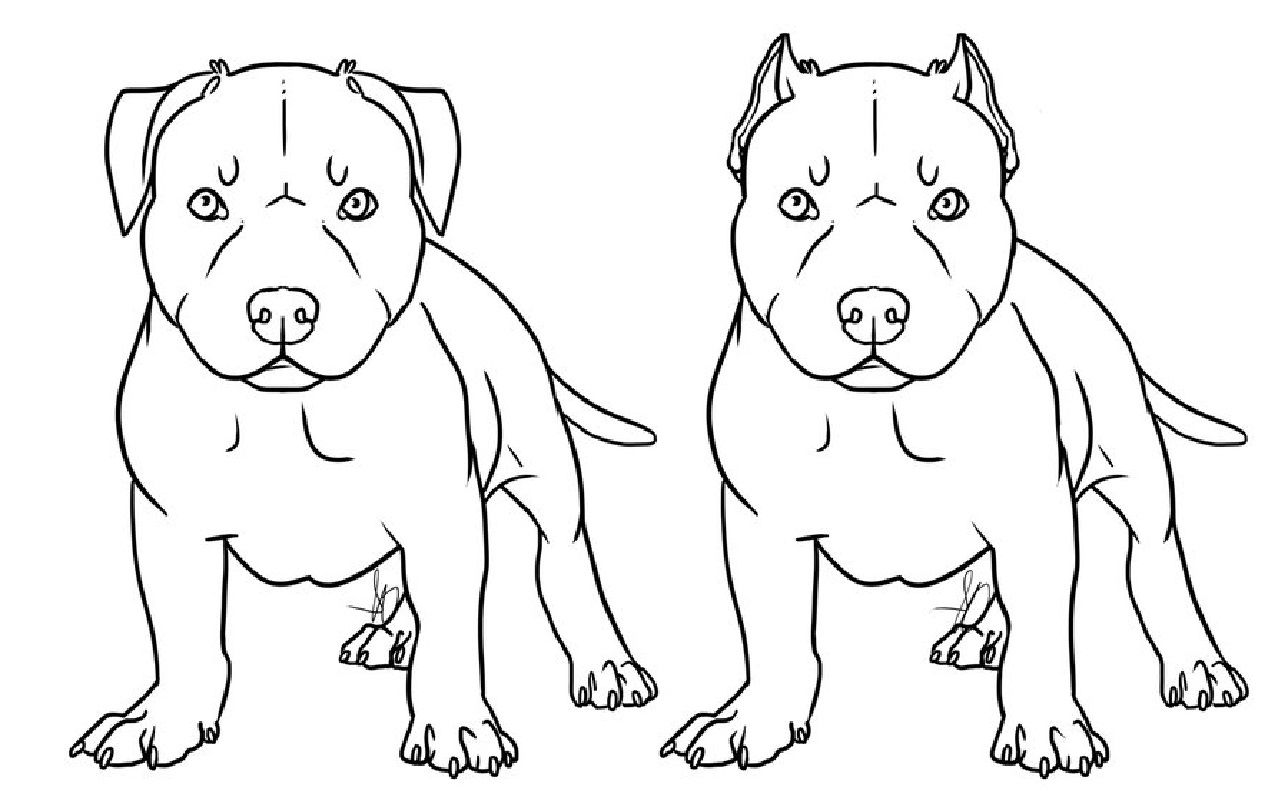 pitbull outline pictures pit bull rubber stamp outline dog cat fur baby pictures pitbull outline