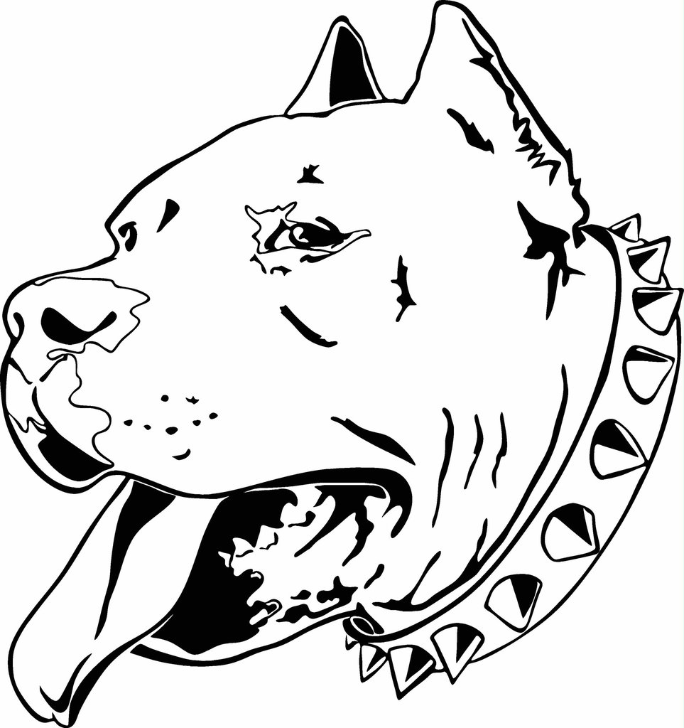 pitbull outline pictures pitbull clipart black white 20 free cliparts download pitbull pictures outline