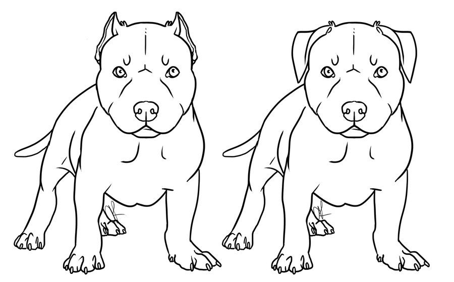 pitbull outline pictures pitbull puppies coloring pages coloring home pictures pitbull outline