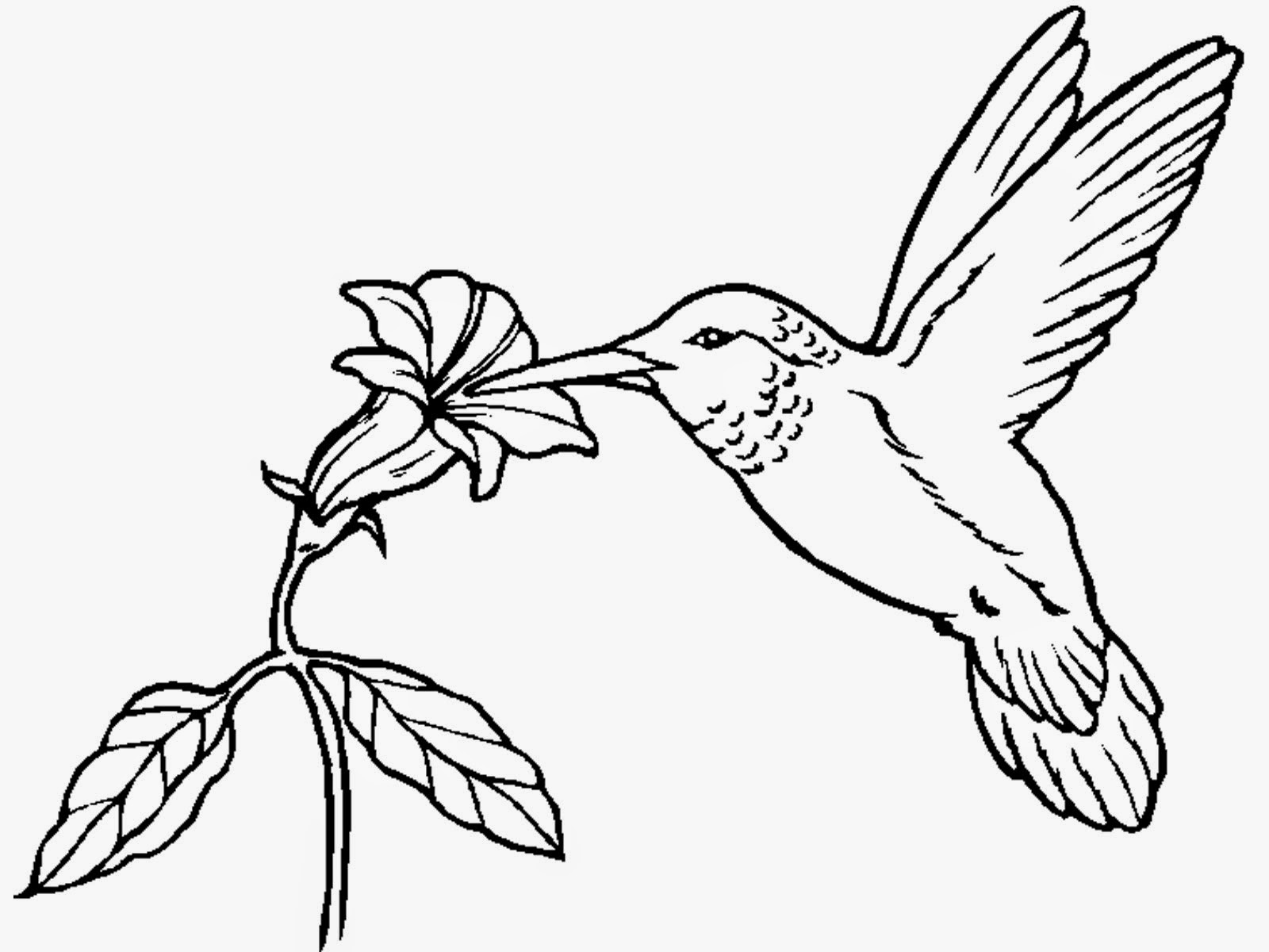 printable pictures of birds big bird coloring pages to print coloring home of birds pictures printable