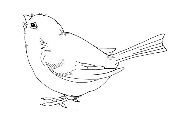 printable pictures of birds bird 6 coloring kids of birds printable pictures