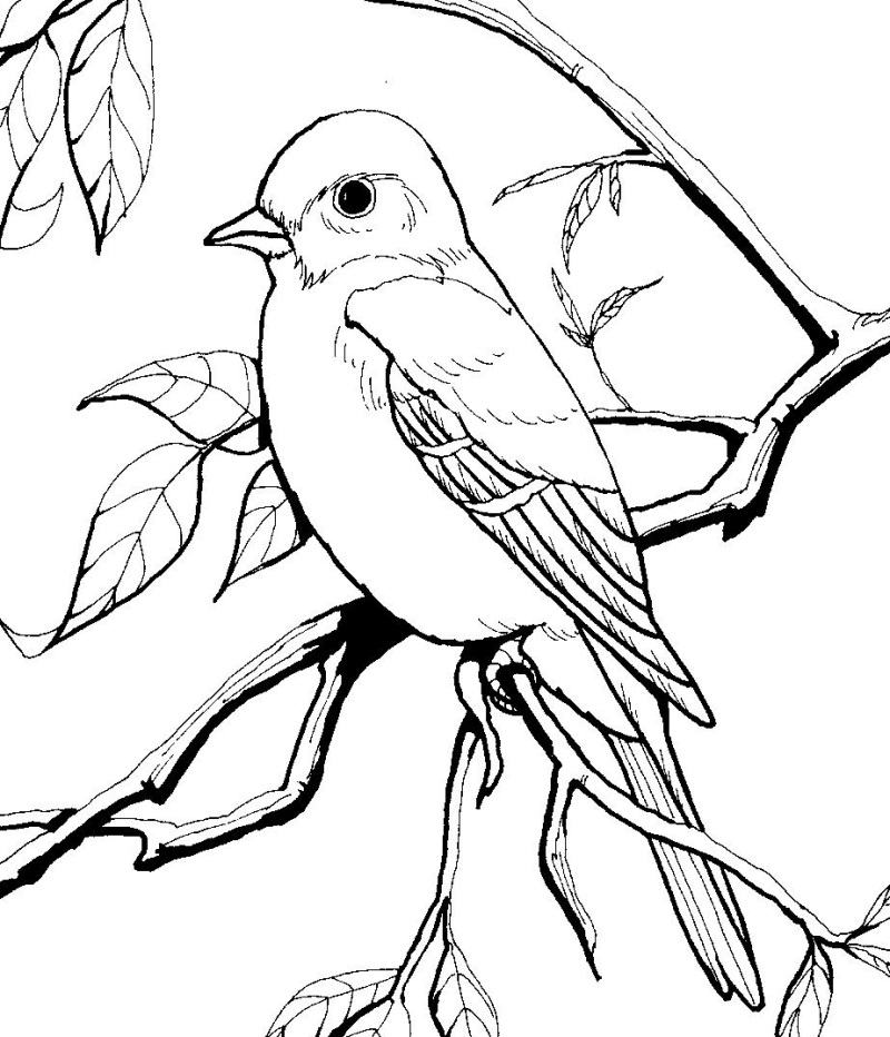 printable pictures of birds bird coloring pages of pictures printable birds