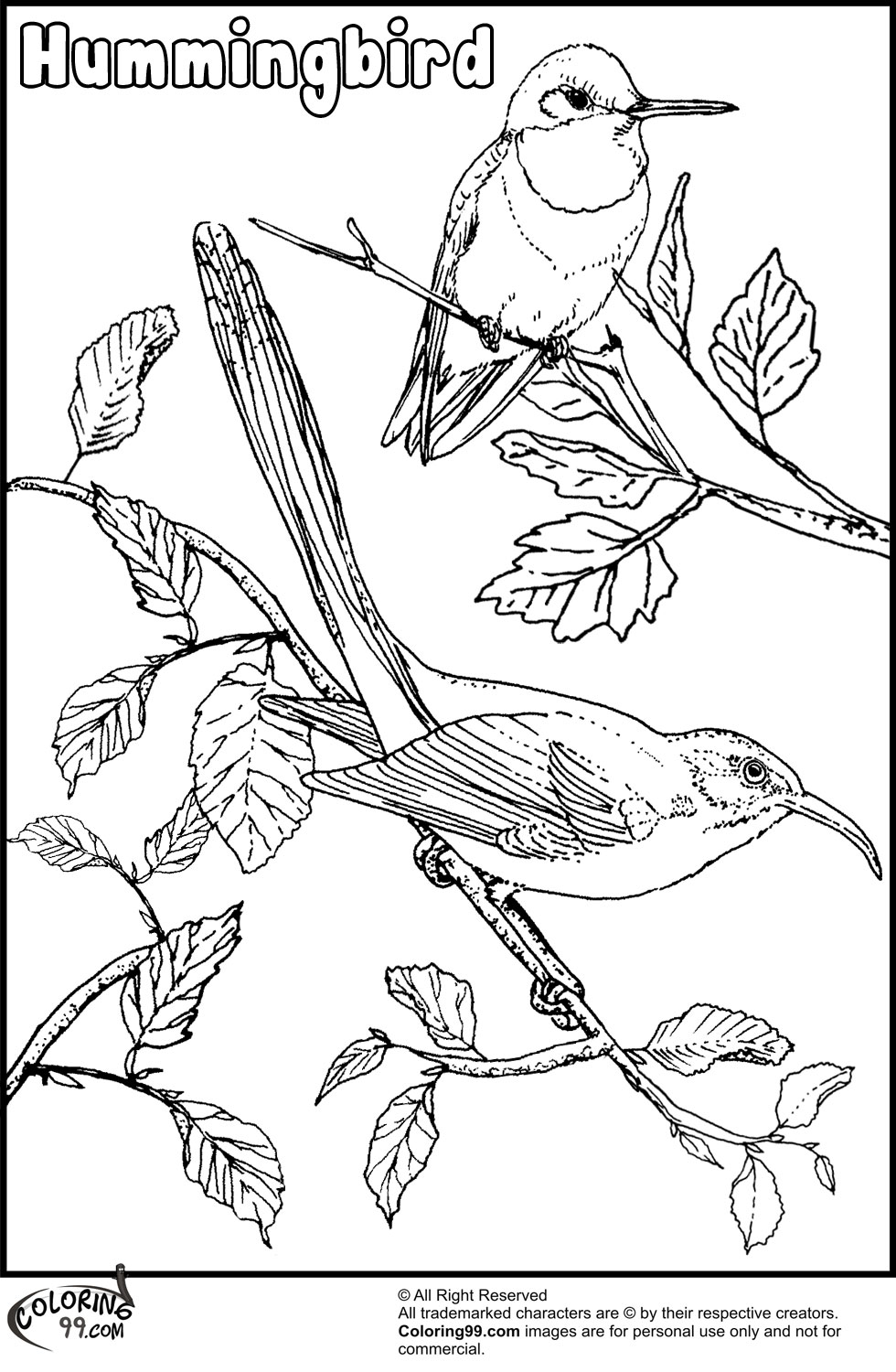printable pictures of birds get this free hummingbird coloring pages 34753 birds printable of pictures