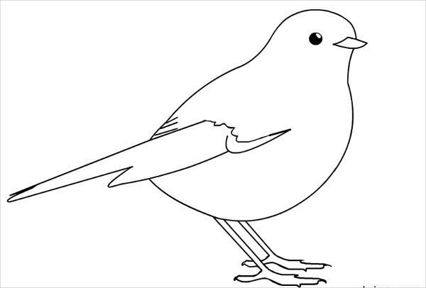printable pictures of birds sparrow colouring pages for toddlers pictures of birds printable