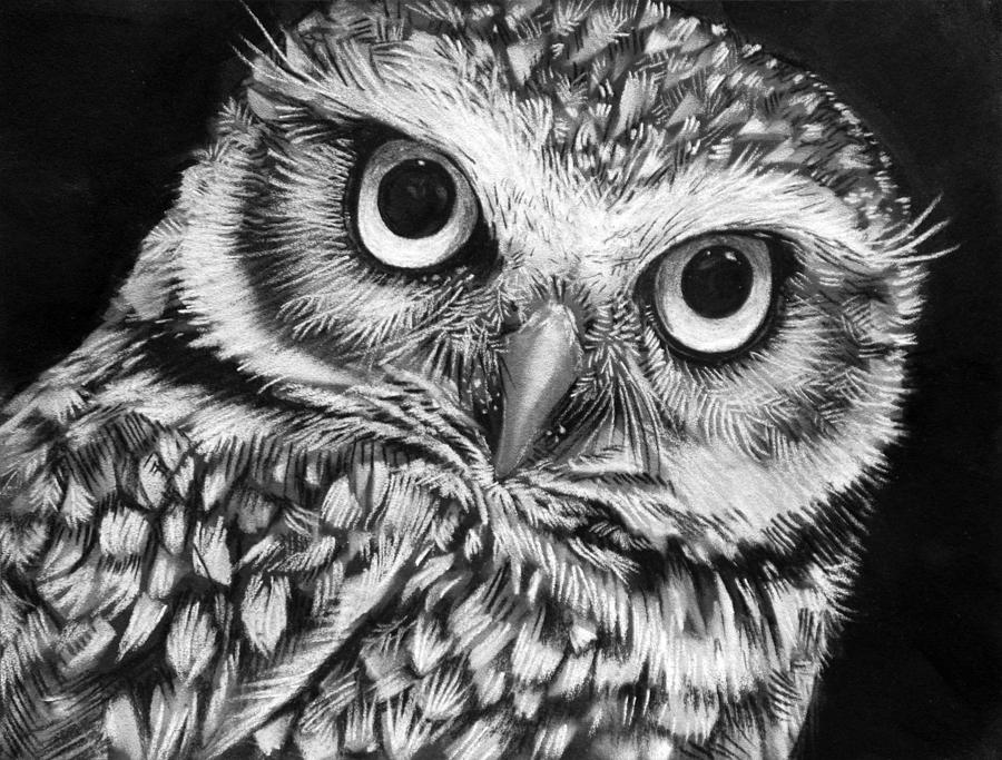 printable pictures of owls owl coloring pages owl coloring pages pictures owls of printable 1 1