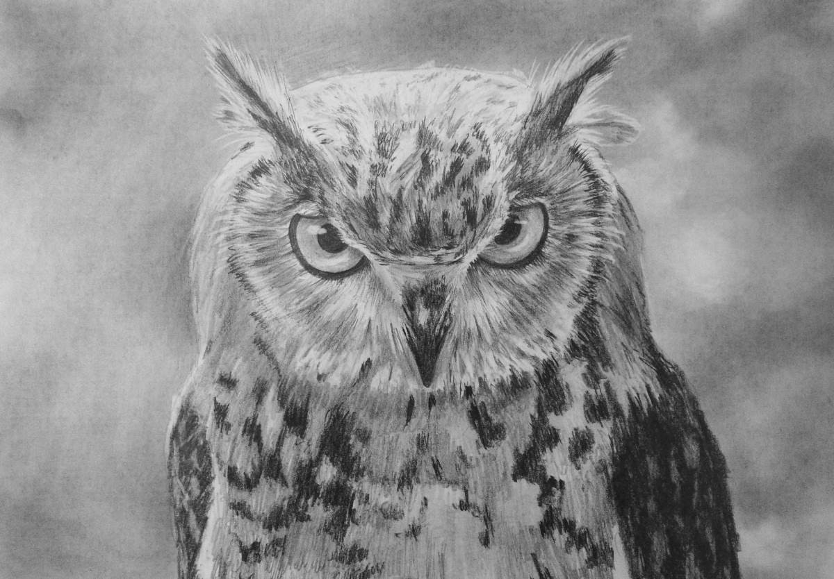 printable pictures of owls owl coloring pages to print only coloring pages printable pictures owls of