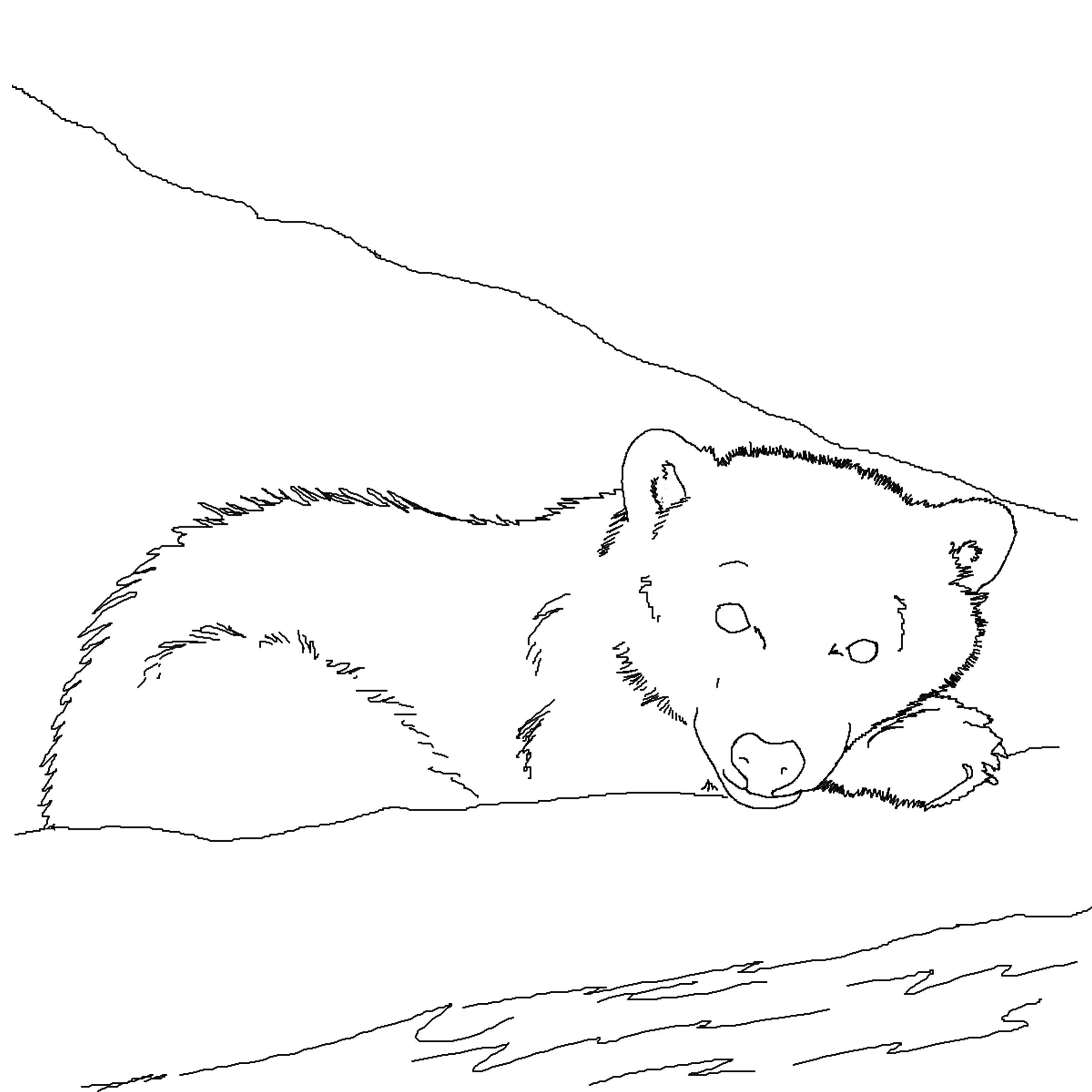 printable polar bear pictures arctic coloring sheets coloring pages pictures bear printable polar