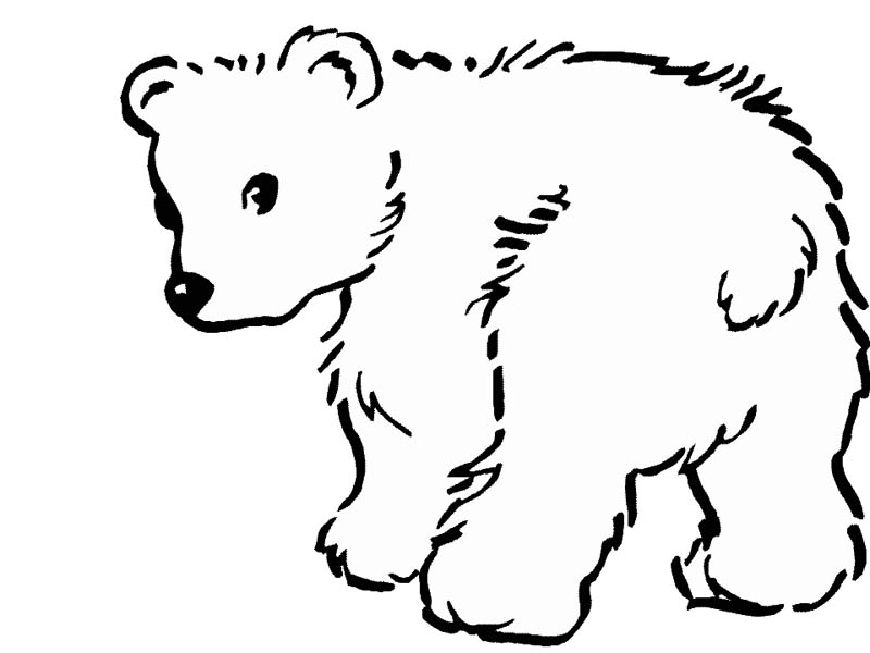 printable polar bear pictures polar bear coloring pages to download and print for free polar bear pictures printable
