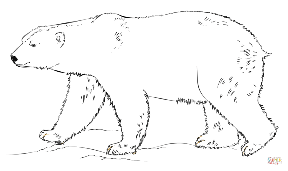printable polar bear pictures polar bear coloring pages to download and print for free polar pictures bear printable
