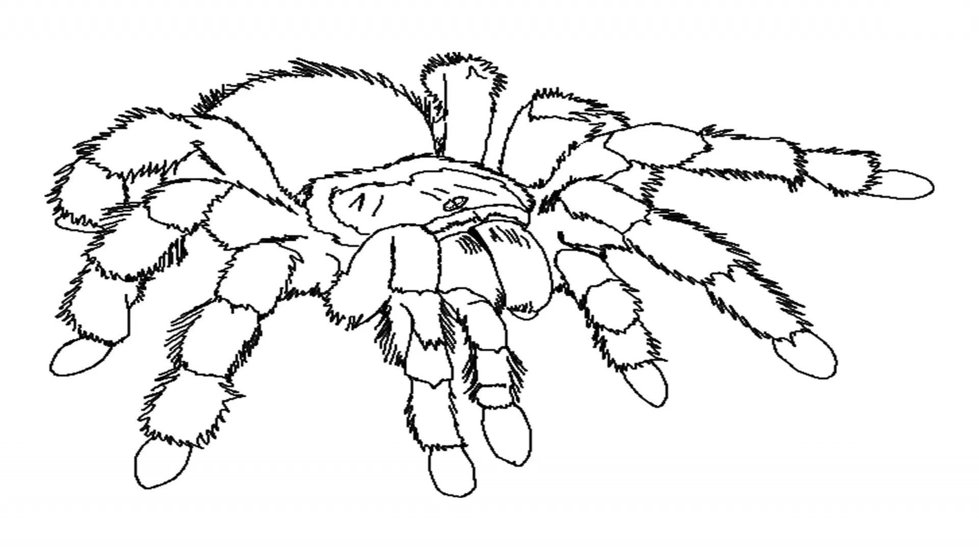 printable spiders spider coloring pages printable coloring home spiders printable