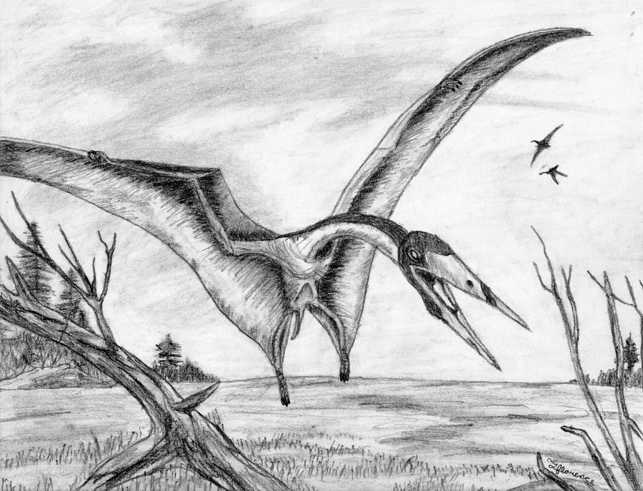 pterodactyl pictures dinosaur pterodactyl photograph by granger pictures pterodactyl