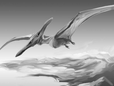pterodactyl pictures pterodactyl country by metadragonart on deviantart pictures pterodactyl