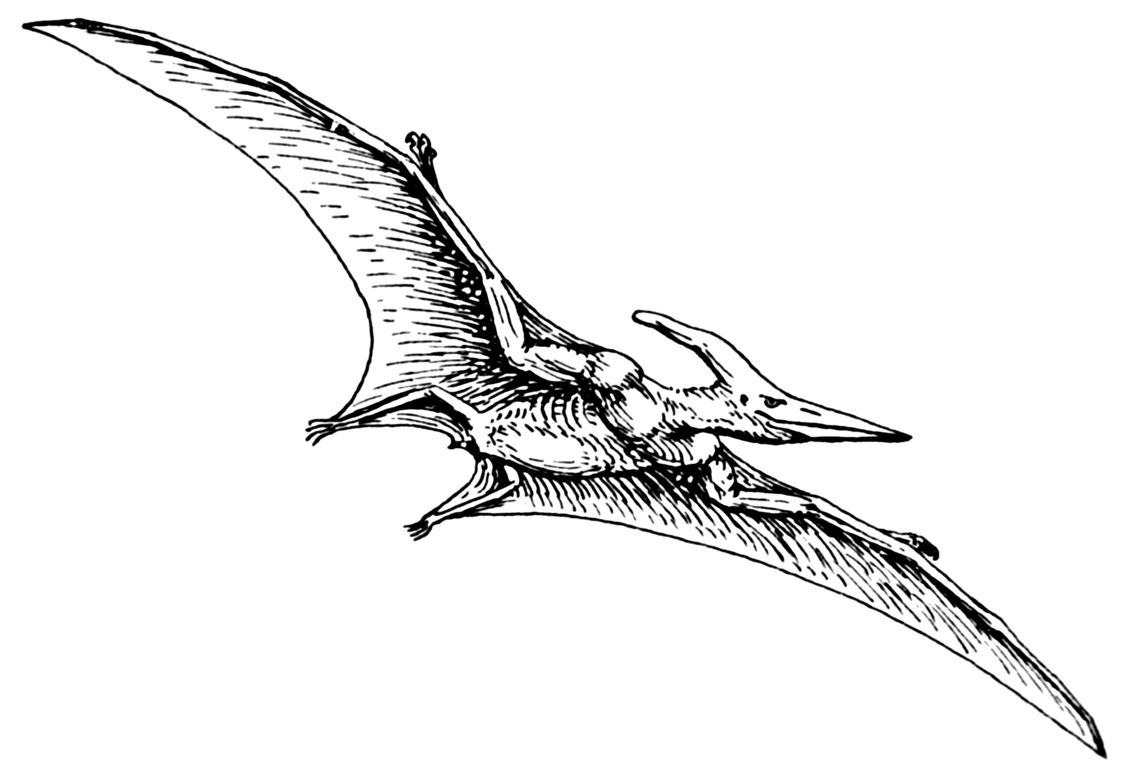 pterodactyl pictures pterodactyl extinct flying reptile photograph by science pictures pterodactyl