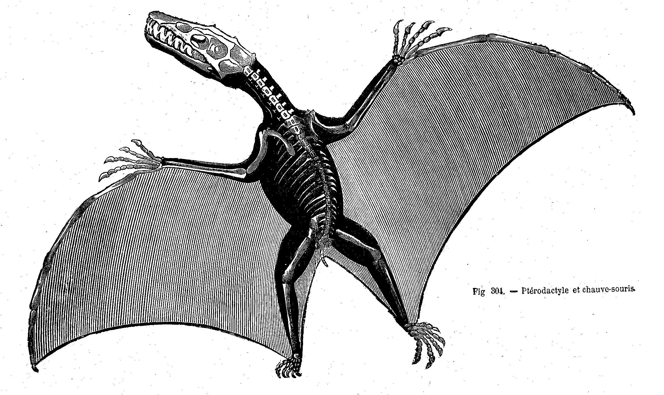 pterodactyl pictures pterodactyl extinct flying reptile photograph by science pterodactyl pictures