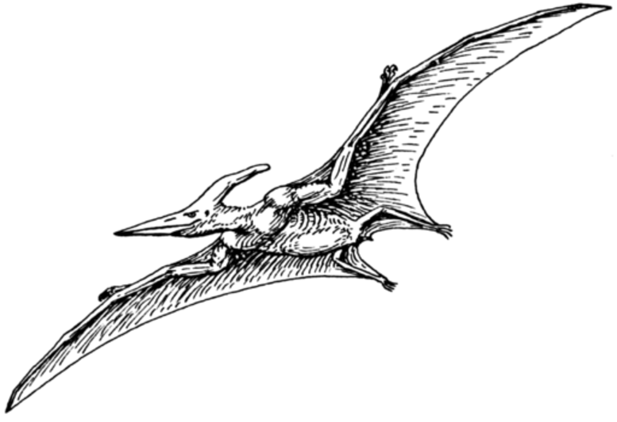 pterodactyl pictures pterodactyl in the corn fields of missouri cryptozoology pterodactyl pictures