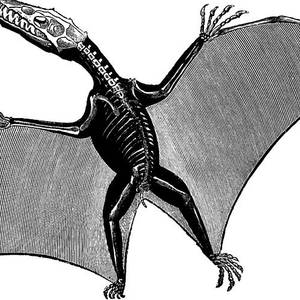 pterodactyl pictures pterodactyl information and gallery pictures pterodactyl
