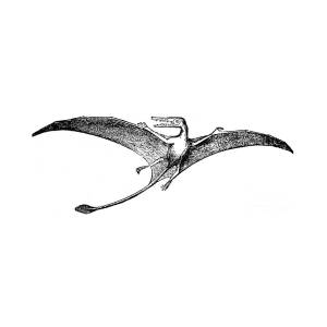 pterodactyl pictures pterodactyls in flight photograph by spencer sutton pictures pterodactyl