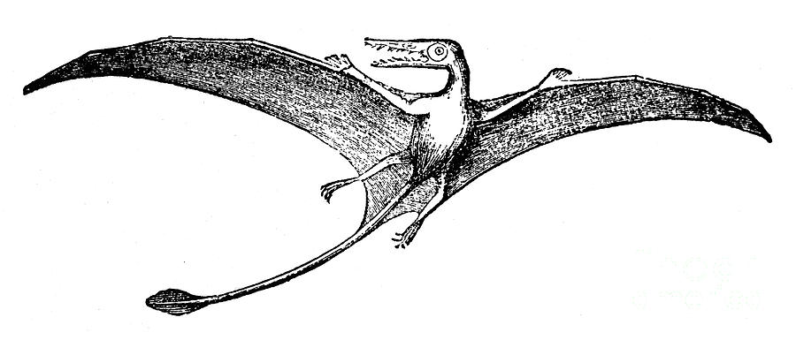 pterodactyl pictures pterodactylus facts and pictures pictures pterodactyl