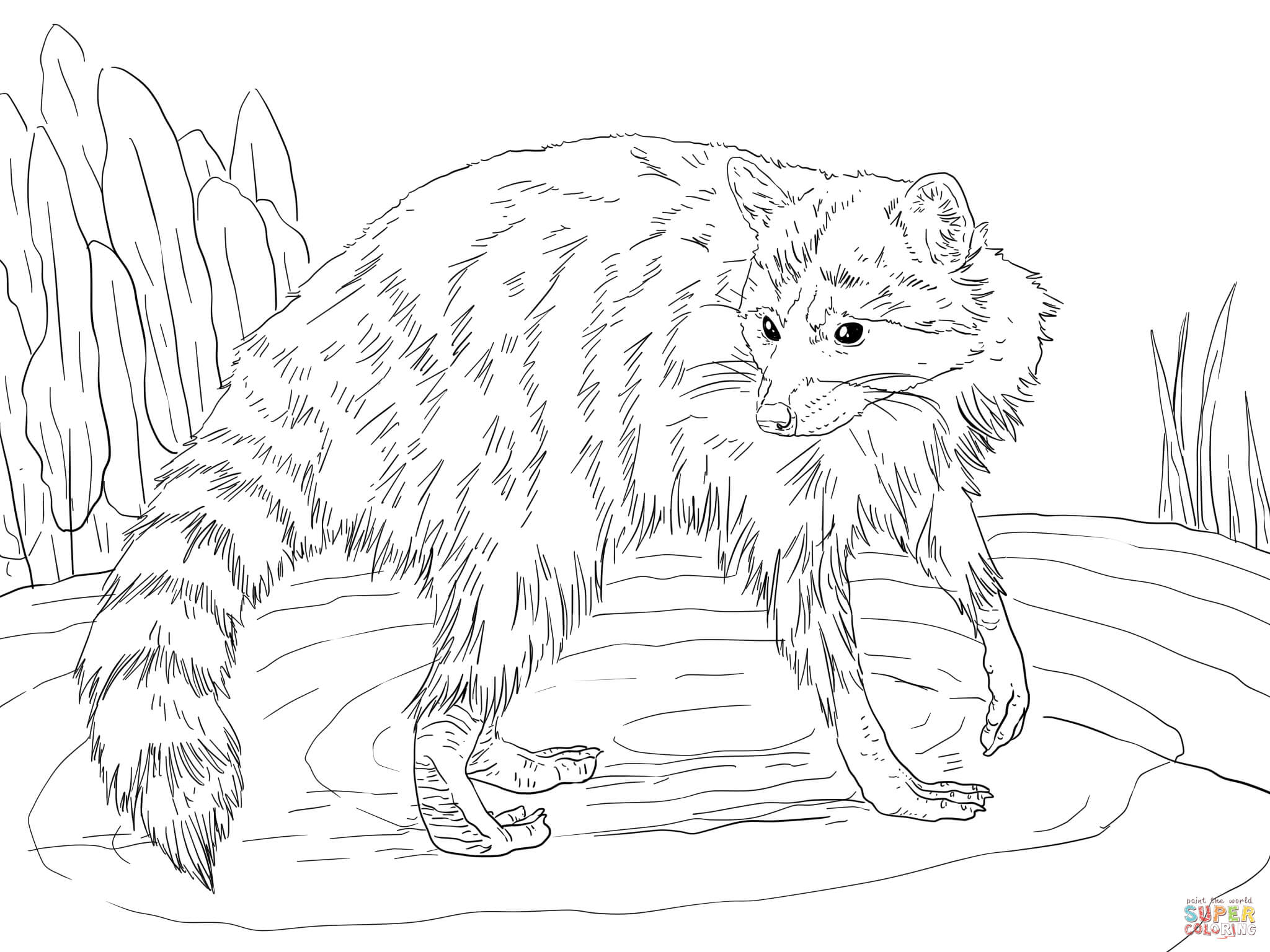 raccoon coloring pictures coloring page of a raccoon coloring home coloring pictures raccoon