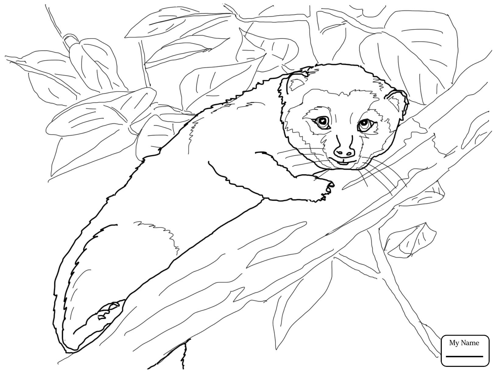 raccoon coloring pictures cute raccoon drawing at getdrawings free download pictures coloring raccoon