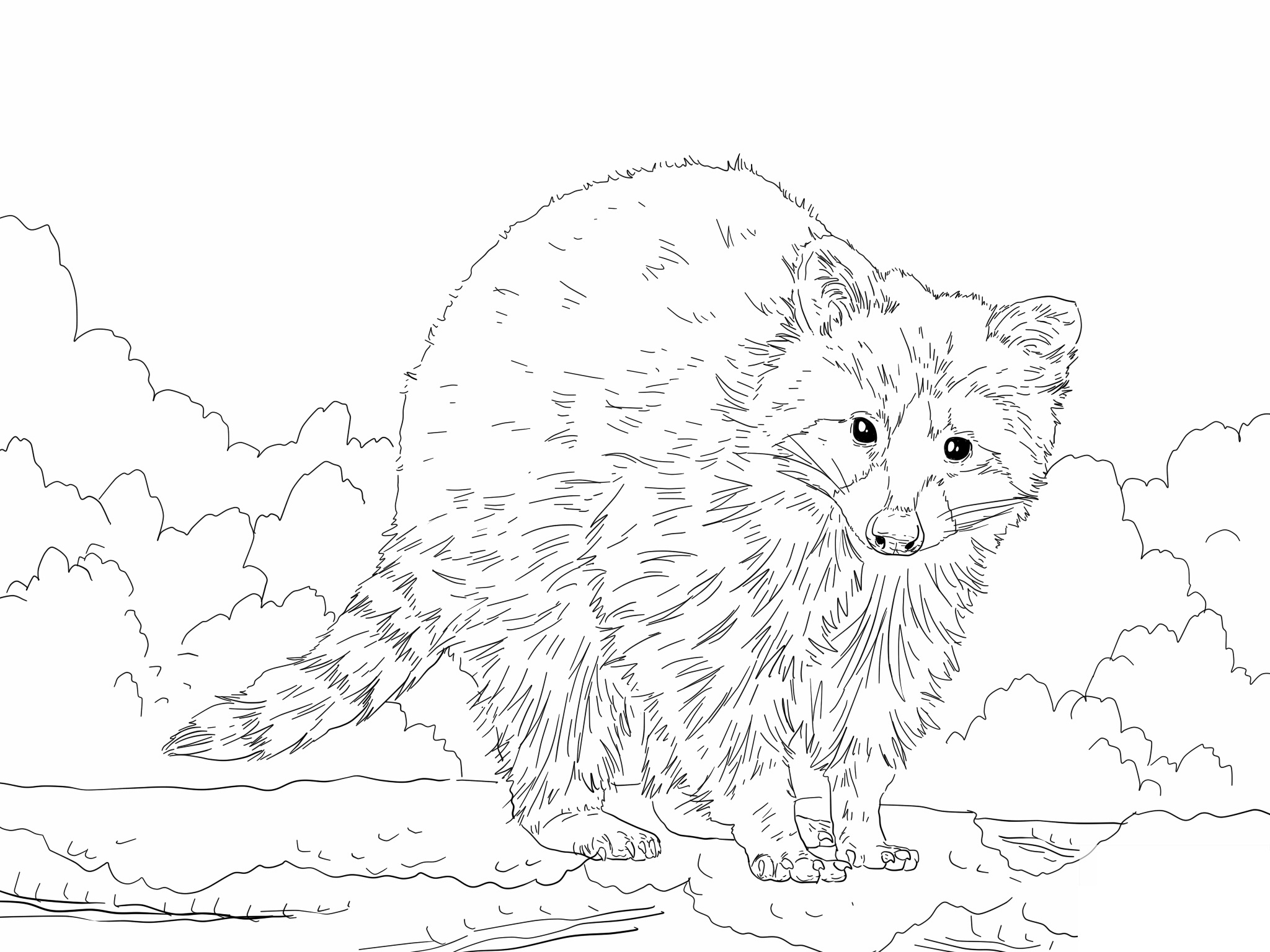 raccoon coloring pictures free printable raccoon coloring pages for kids raccoon coloring pictures 1 1