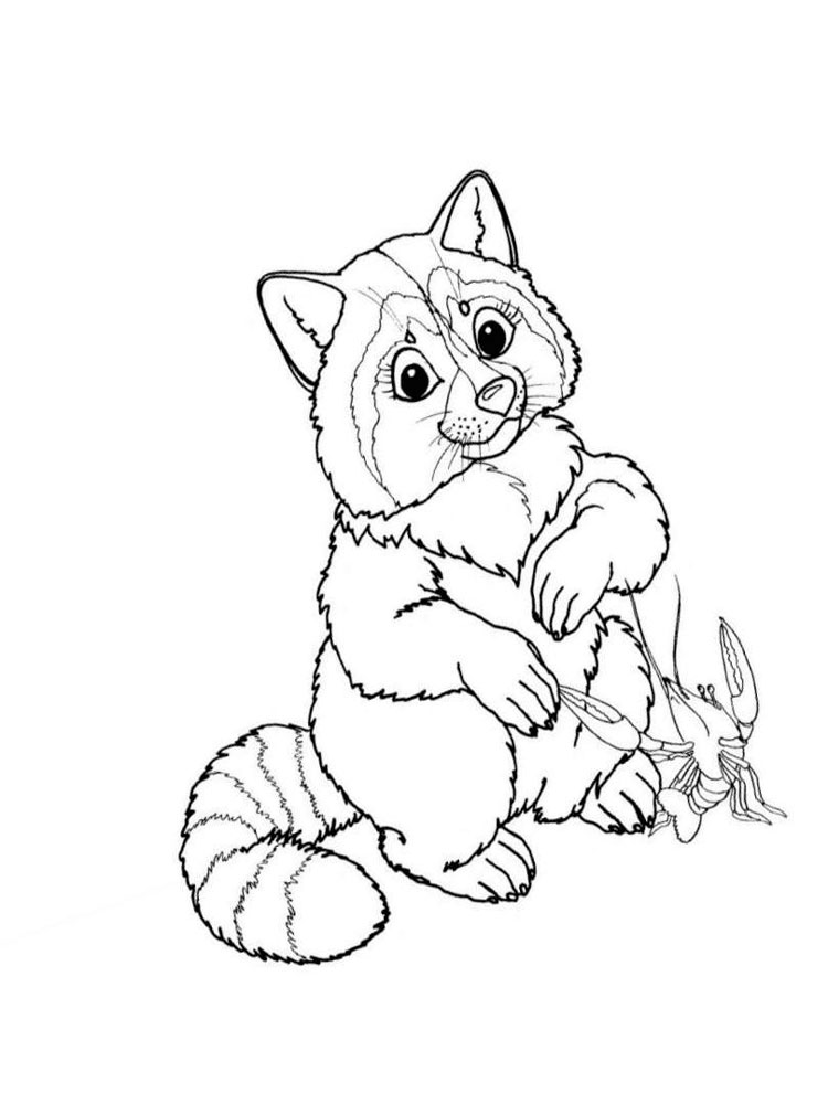 raccoon coloring pictures raccoon coloring pages download and print raccoon raccoon coloring pictures