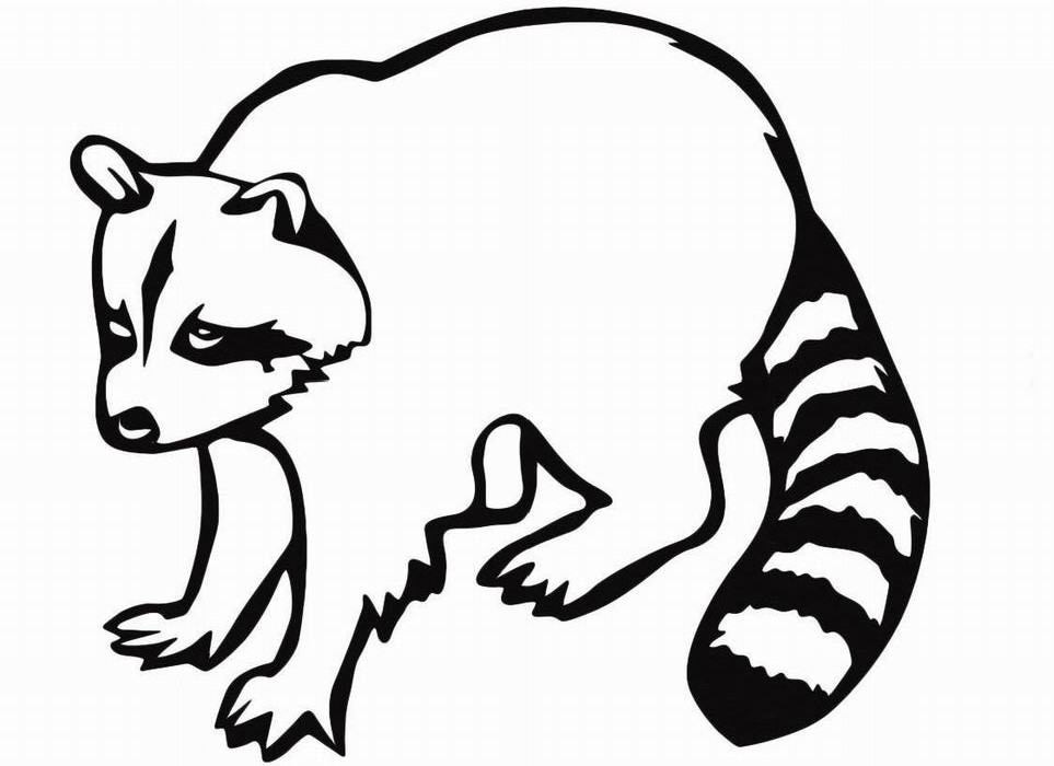 raccoon coloring pictures raccoon coloring pages to download and print for free coloring pictures raccoon