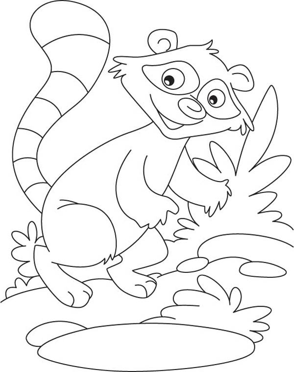 raccoon coloring pictures rocky the raccoon coloring page download print online pictures raccoon coloring