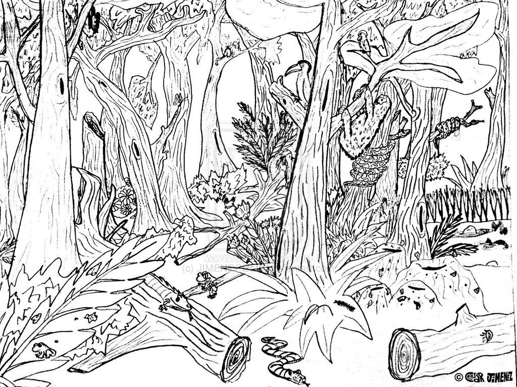 rainforest tree coloring page arbor day coloring pages forest trees forest coloring rainforest page tree coloring