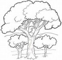 rainforest tree coloring page cute jungle tree coloring pages coloring rainforest page tree