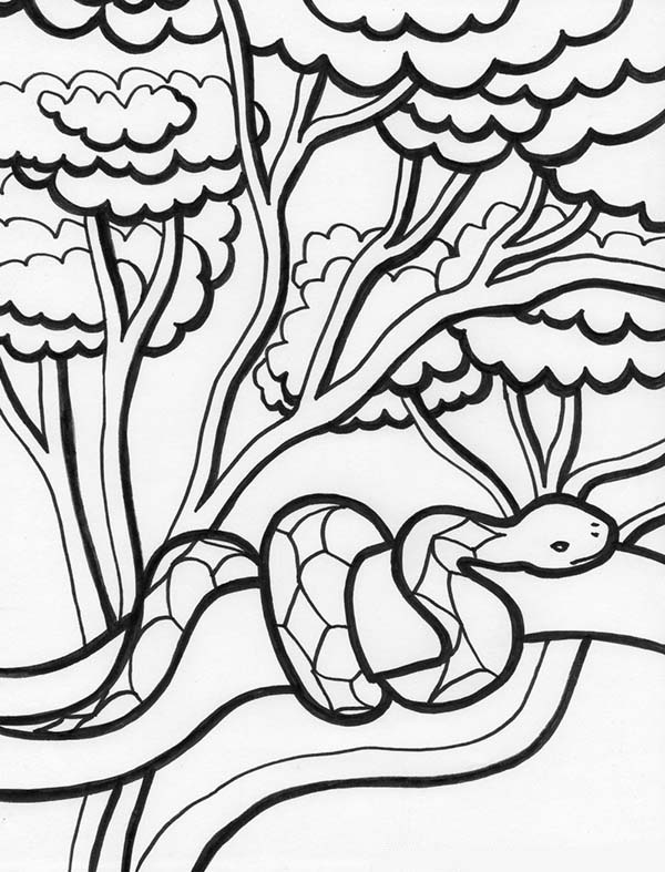 rainforest tree coloring page forest trees coloring pages coloring pages page coloring tree rainforest
