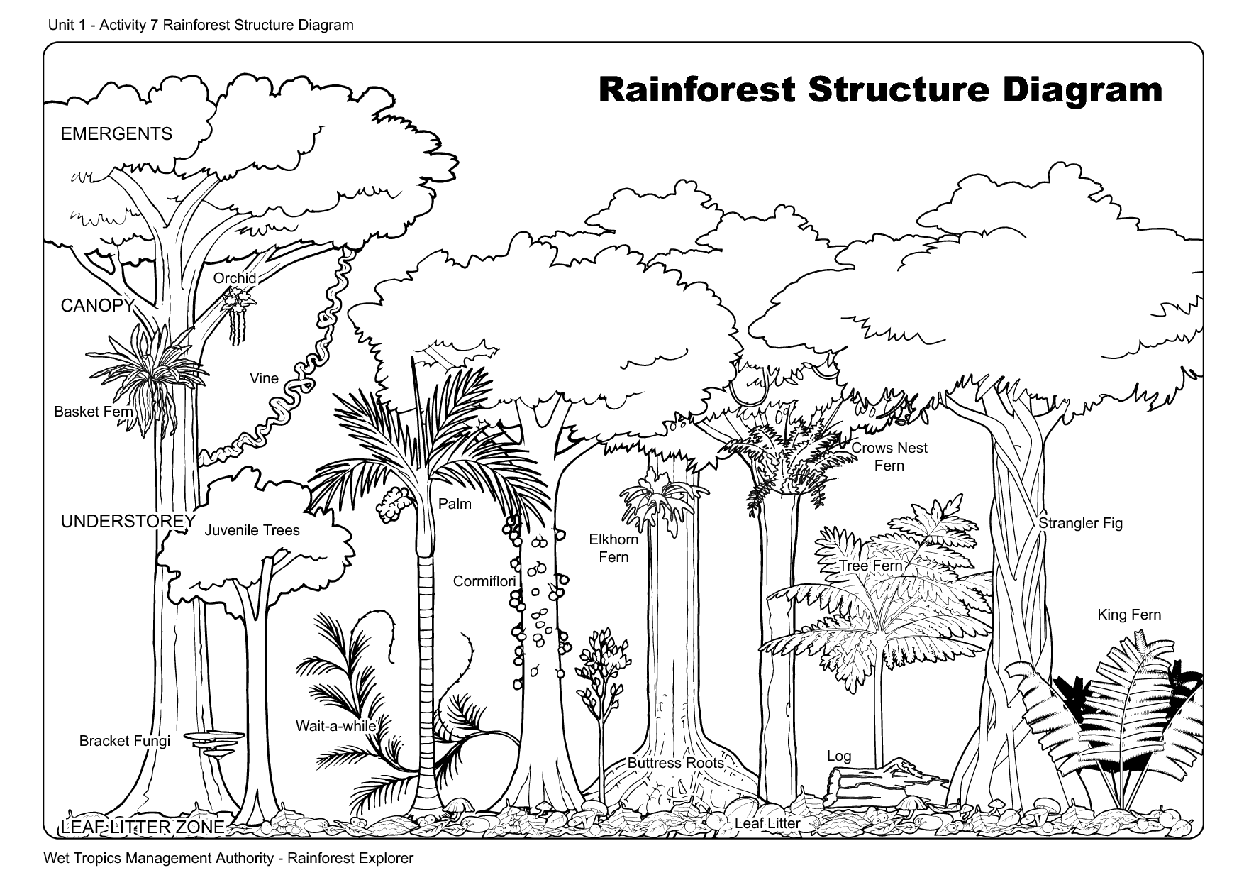 rainforest tree coloring page forest trees drawing at getdrawings free download rainforest coloring page tree