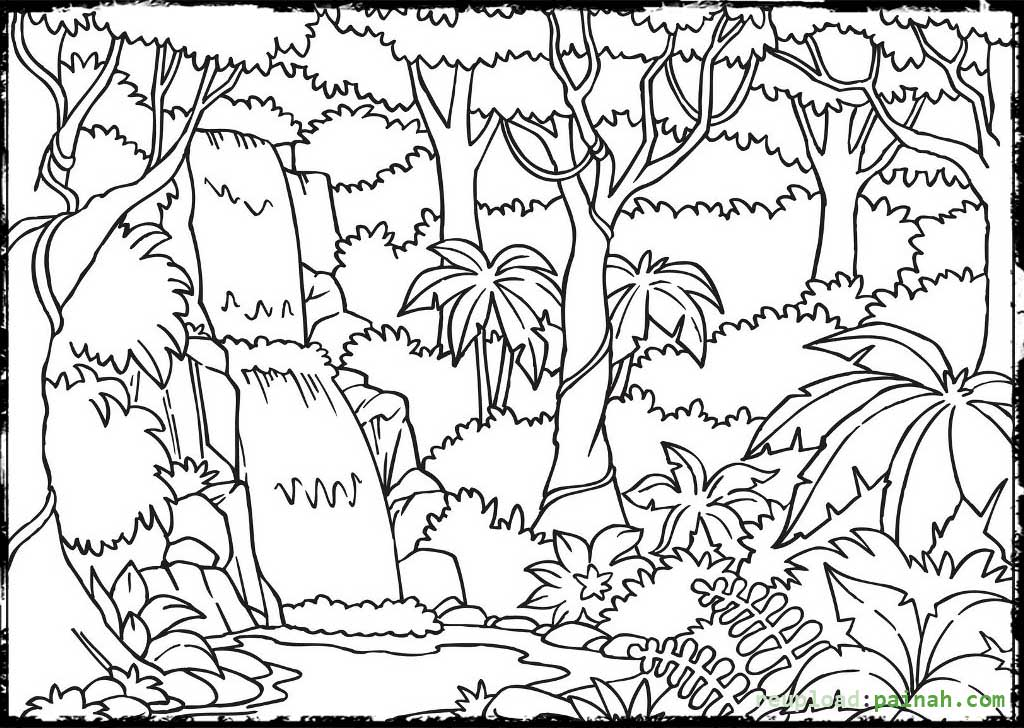 rainforest tree coloring page image result for draw tropical rainforest trees rainforest coloring page tree