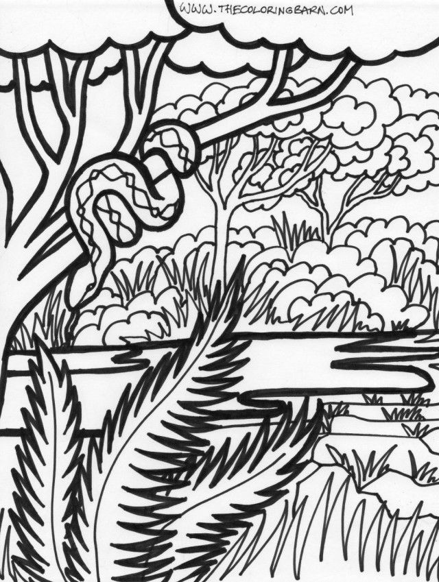 rainforest tree coloring page printable giant redwood trees coloring page for both tree rainforest coloring page