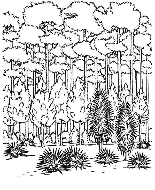 rainforest tree coloring page rain forest trees coloring page coloring home page tree rainforest coloring