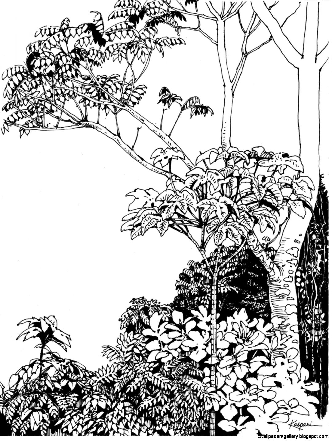 rainforest tree coloring page rainforest coloring pages to download and print for free page tree rainforest coloring