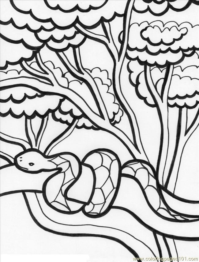 rainforest tree coloring page rainforest snake on tree coloring page download print rainforest tree coloring page