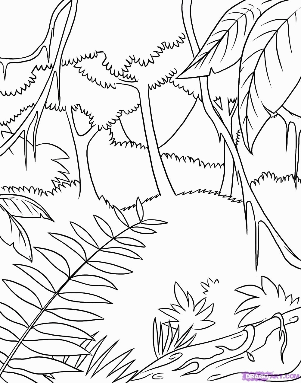 rainforest tree coloring page rainforest tree drawing at getdrawings free download coloring rainforest tree page