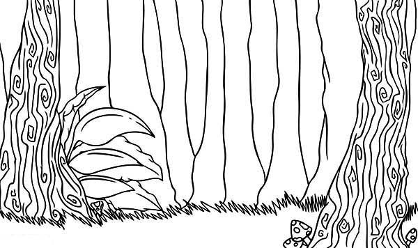 rainforest tree coloring page rainforest tree drawing at getdrawings free download tree rainforest page coloring