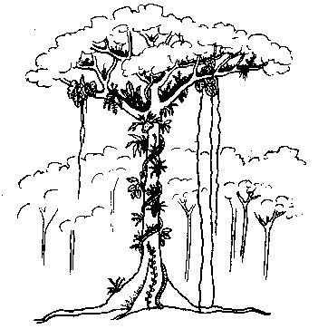 rainforest tree coloring page rainforest trees colouring pages enchanted forest page coloring rainforest tree