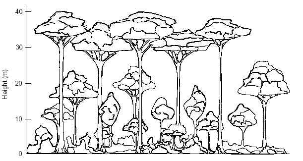 rainforest tree coloring page rainforest trees drawing at getdrawings free download coloring page rainforest tree