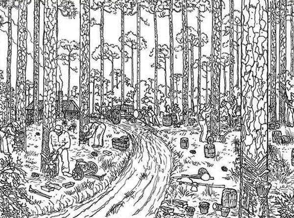 rainforest tree coloring page rainforest trees drawing at getdrawings free download rainforest page coloring tree
